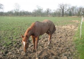 sand-tiger-at-horseshoe-farm-001a
